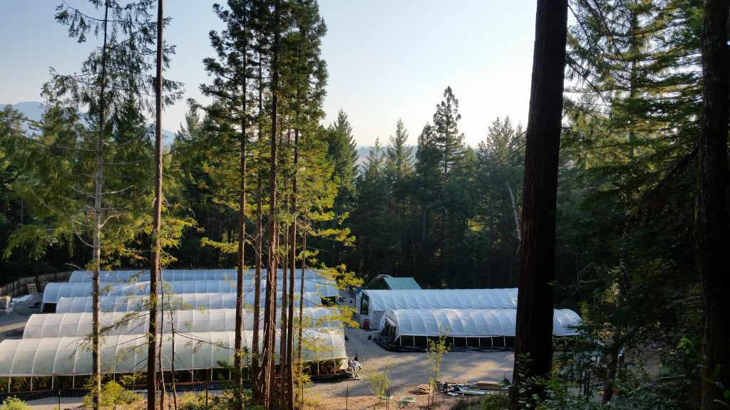 Humboldt Redwood Healing