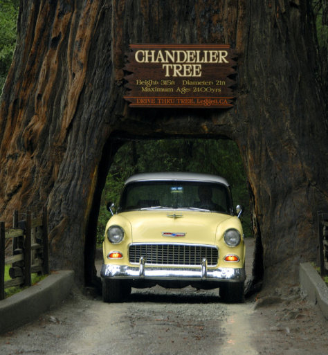 FireShot Pro Screen Capture #064 – 'California Redwoods-Northern California's Chandelier Drive-Thru Tree park provides hikin_' – www_drivethrutree_com