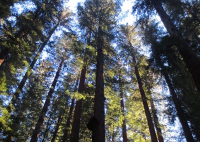 Richardson Grove